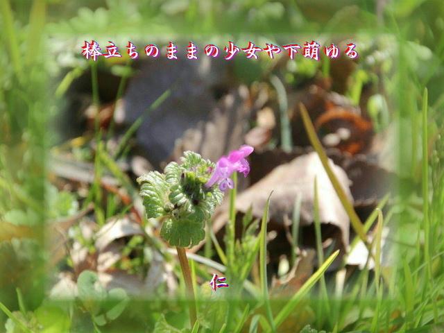 monomane575qy1803bodatino1w2.jpg