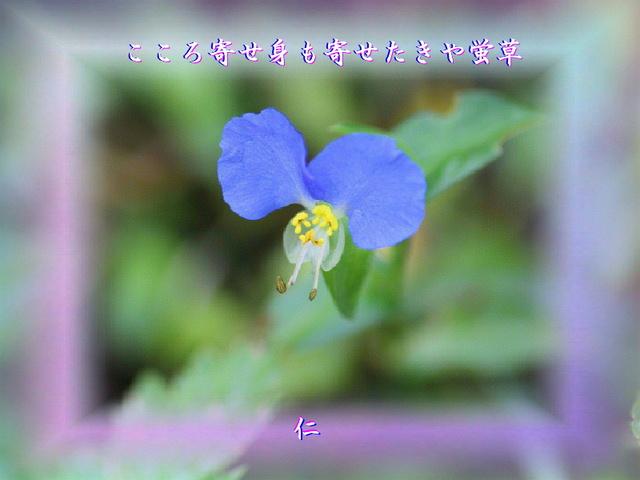 monomane575qq1104kokoroyose1w.jpg